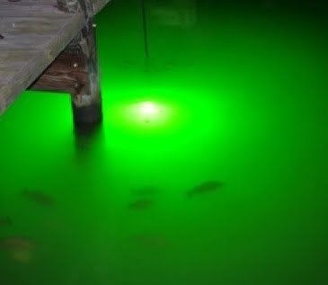 green underwater fishing lights, Reel Combo